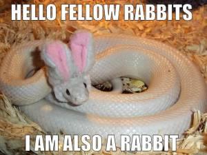 twanz-wabbit